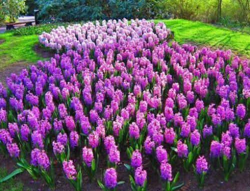 Tavaszi virágáradat